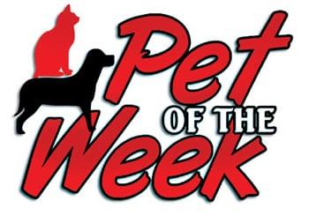 Pet-of-the-Week3colweb