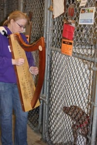 Photo by Sue Suchyta. Rebecca Newbry of Lincoln Park plays her harp for Mavi, a pitt bull terrier mix, at the Dearborn Animal Shelter.