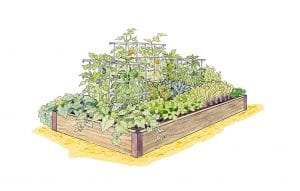 Illustration courtesy of Gardener's Supply Co. A productive garden starts with a plan, but choosing the best vegetables to grow and where to plant them can be overwhelming.