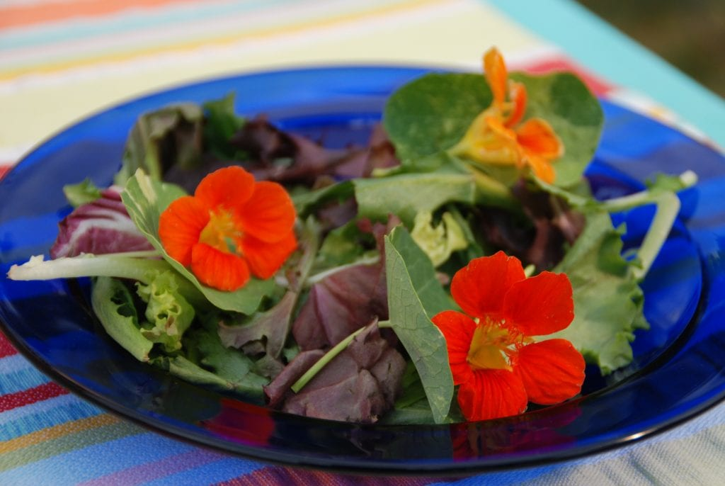 Photo courtesy of Melinda Myers, LLC Add a bit of color and interest to salads with edible flowers like nasturtium.
