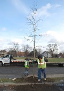 Photo courtesy of the city of Dearborn Workers plant a tree in the southeast section of Dearborn earlier this month.