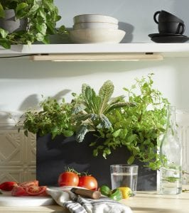 Photo courtesy of Modern Sprout Grow herbs or other leafy greens indoors under a Growbar LED light fixture or near a sunny window.