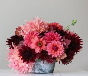 Photo by Longfield Gardens New for 2019 from Longfield Gardens: Flirty Fleurs Sorbetto Collection, featuring dahlias HS Date, Rip City, Penhill Watermelon and Nuit d'Ete.