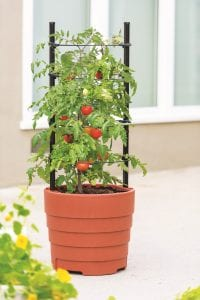 Photo courtesy of Gardener's Supply Company When growing tomatoes in container gardens, look for containers with built-in trellises and large reservoirs that help promote healthy growth and productivity.
